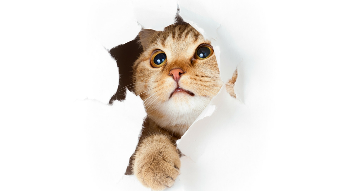 Cat Boarding And The Delicate Nature Of Cats Petstayadvisor