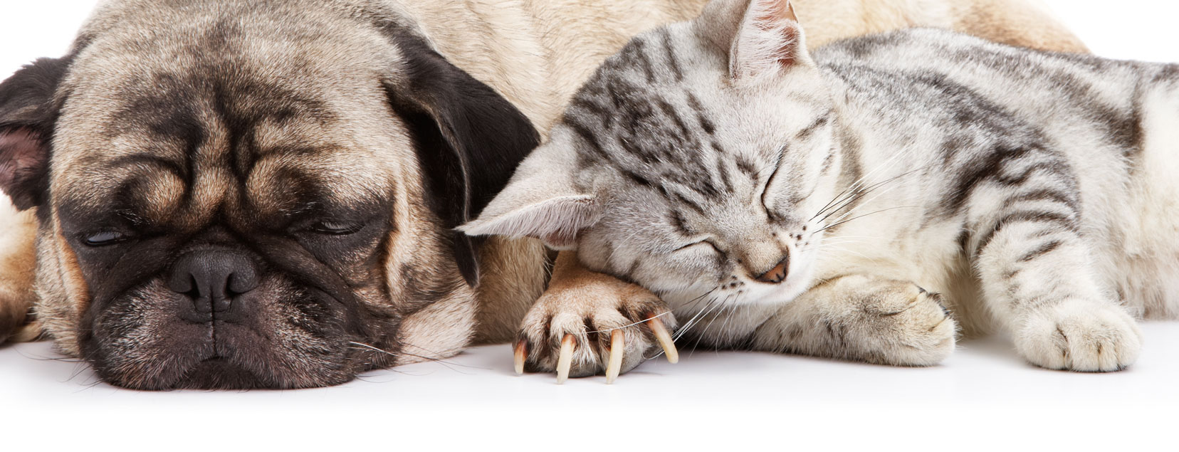 dog and cat PetStayAdvisor