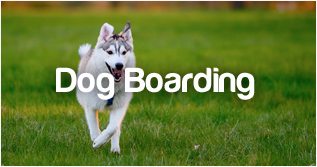 PetStayAdvisor Dog Boarding