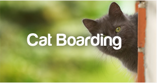 PetStayAdvisor Cat Boarding
