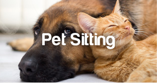 PetStayAdvisor Pet Sitting