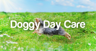 PetStayAdvisor Doggy Day Care