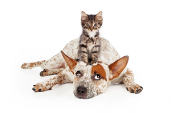 3 Things to Bring When Kennel Boarding your Dog or Cat | PetStayAdvisor