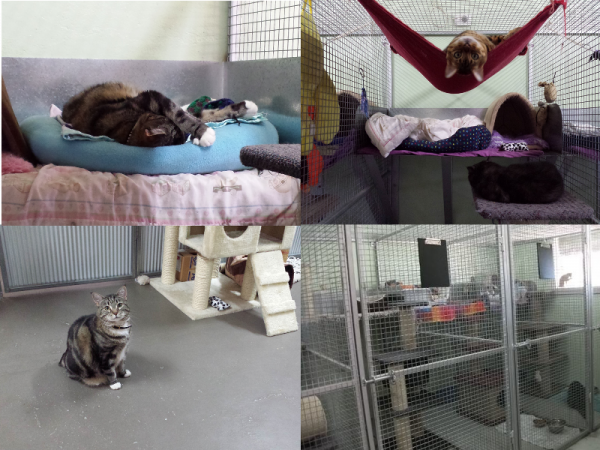 Pawz N Clawz Pet Accommodation