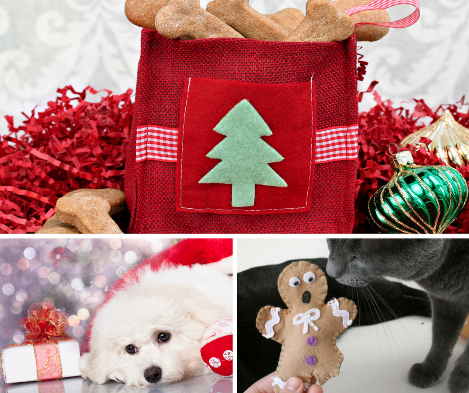 3 Fun and Easy DIY Christmas Pet Gifts - PetStayAdvisor