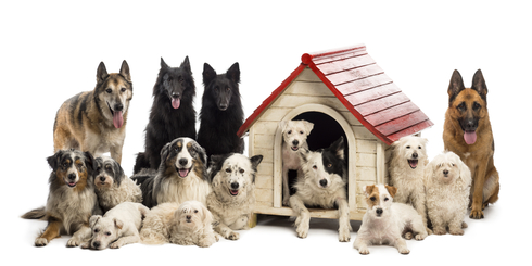 dogs_Boarding_Kennel