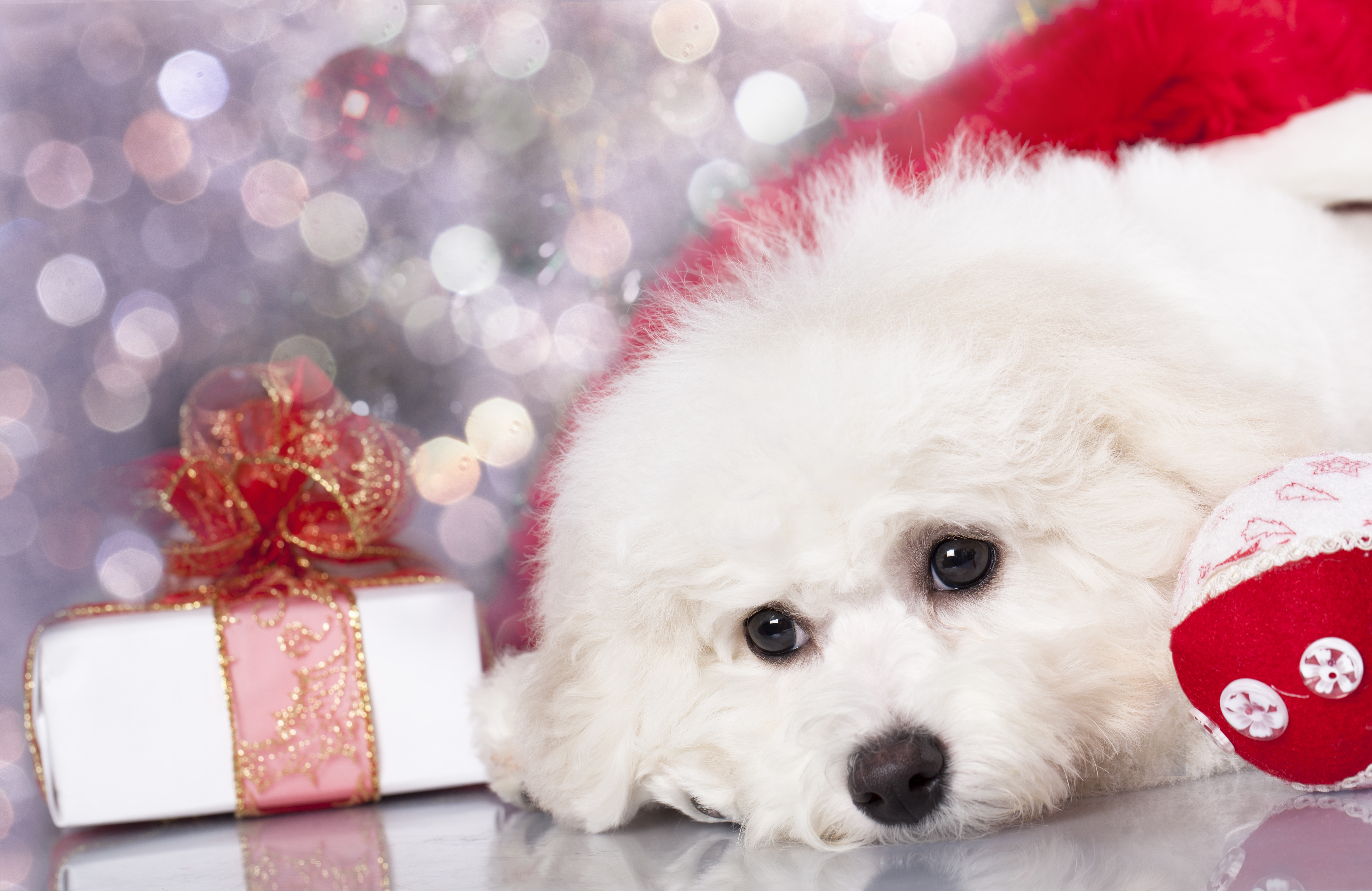 4 Fabulous Christmas Pet Gifts - PetStayAdvisor