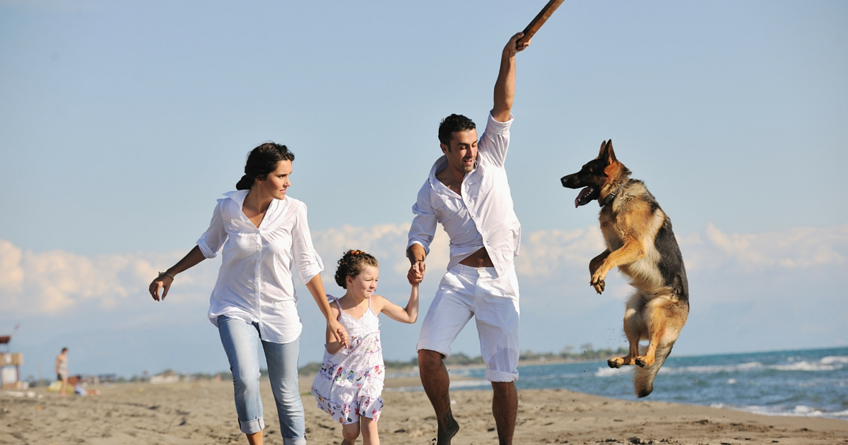 5 ways to enjoy a stress free holiday with your Dog