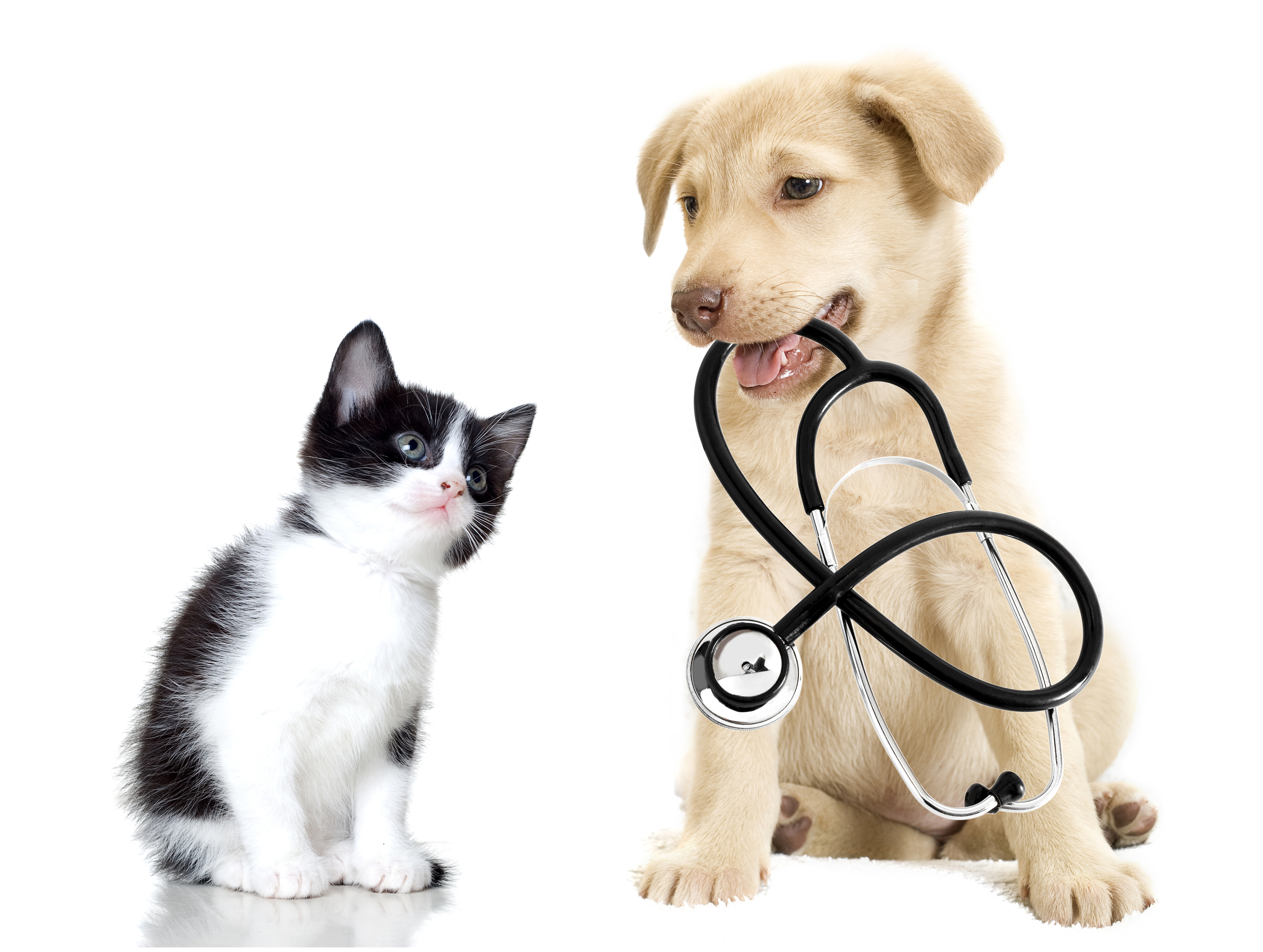 5 tips for keeping your pets healthy and happy