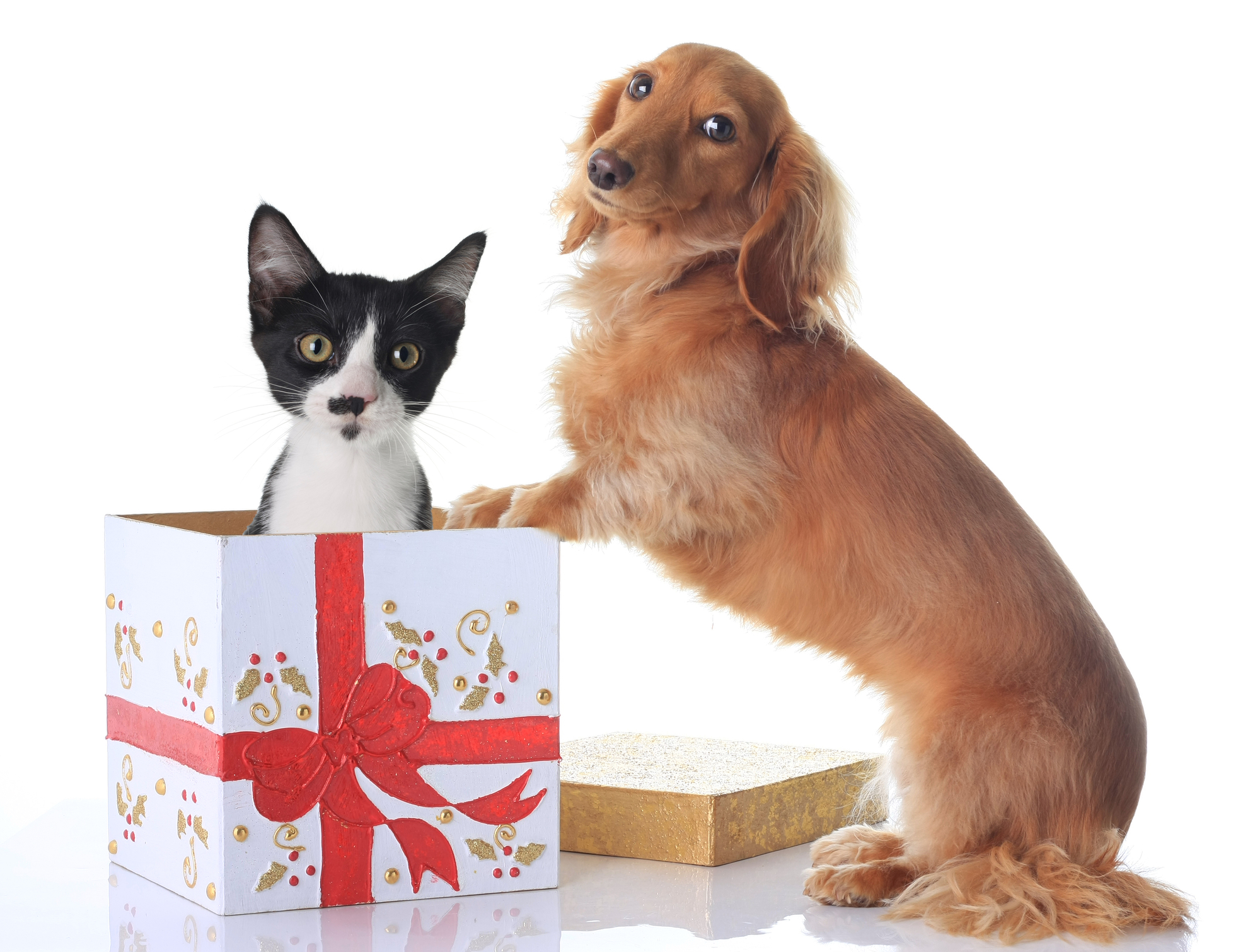 Christmas Presents For Dogs And Cats
